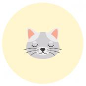 Katėms