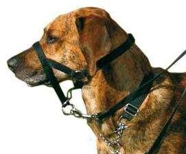 Trixie Top Trainer - Antsnukiai šunims. Šunų antsnukis treniruotėms S/1 (snukio apimtis 22cm.)