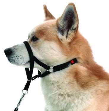 Trixie - Antsnukiai šunims. Šunų antsnukis treniruotėms M (snukio apimtis 27cm.)